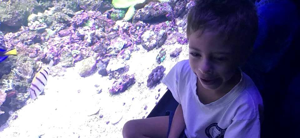 Alunos da Educação Infantil do INES visitam AquaRio
